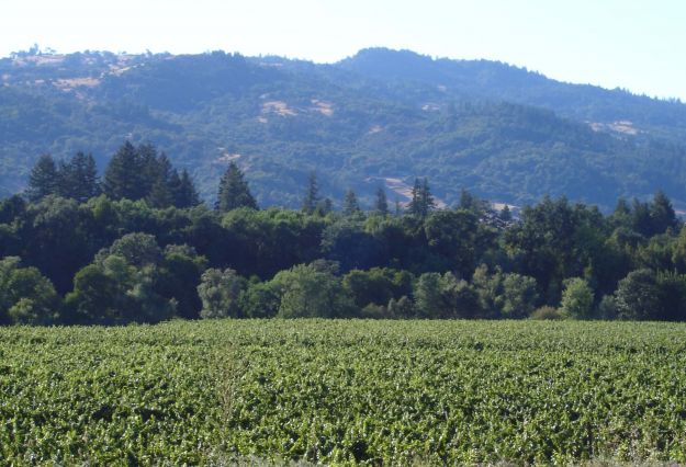 Redwood Valley