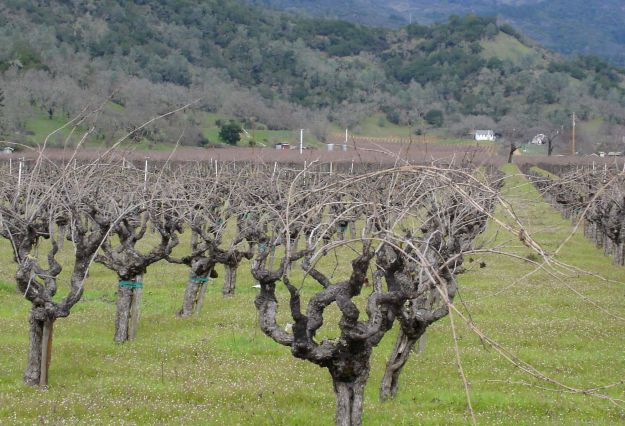 Zinfandel Old Vines